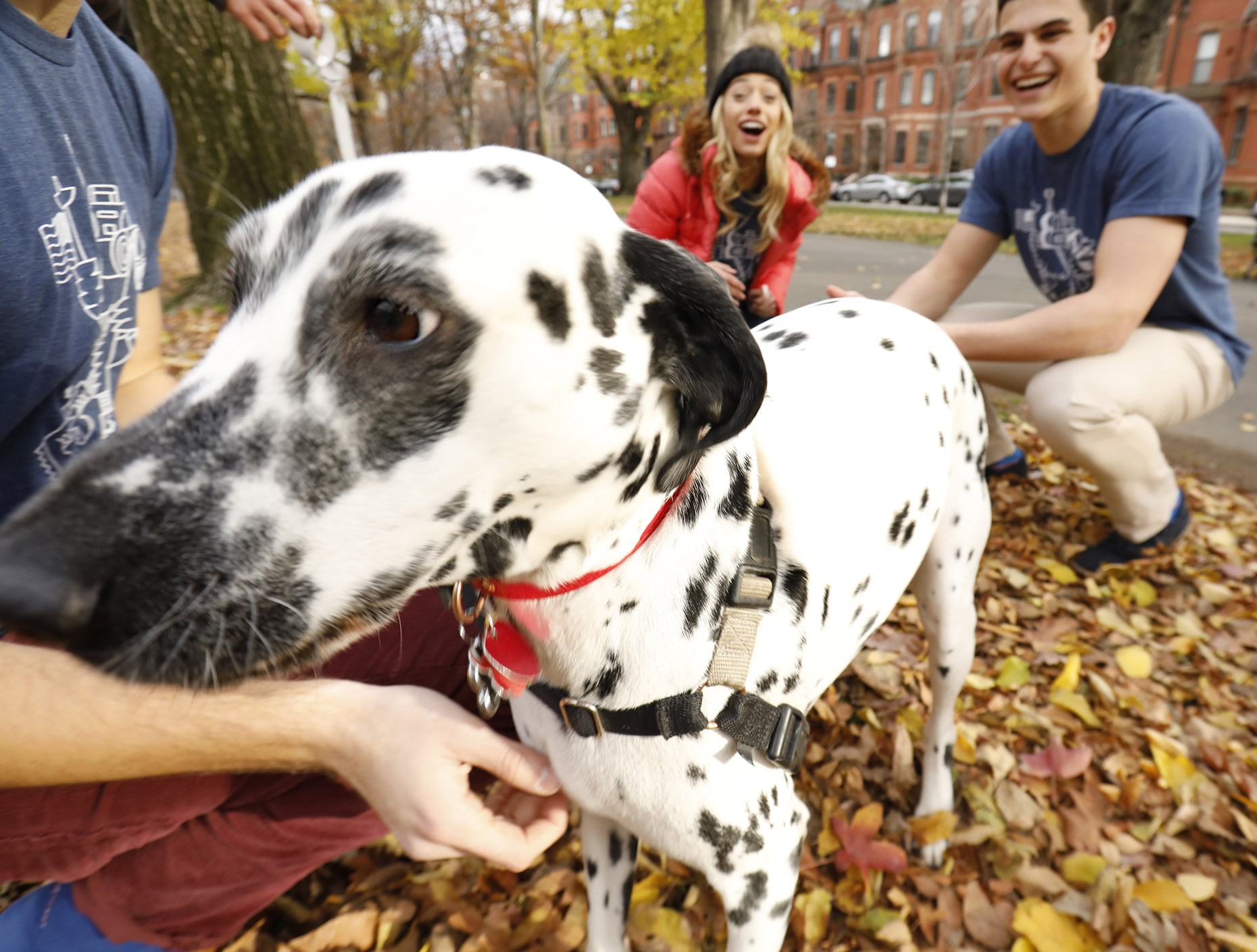 Dalmation on the Commonwealth Mall