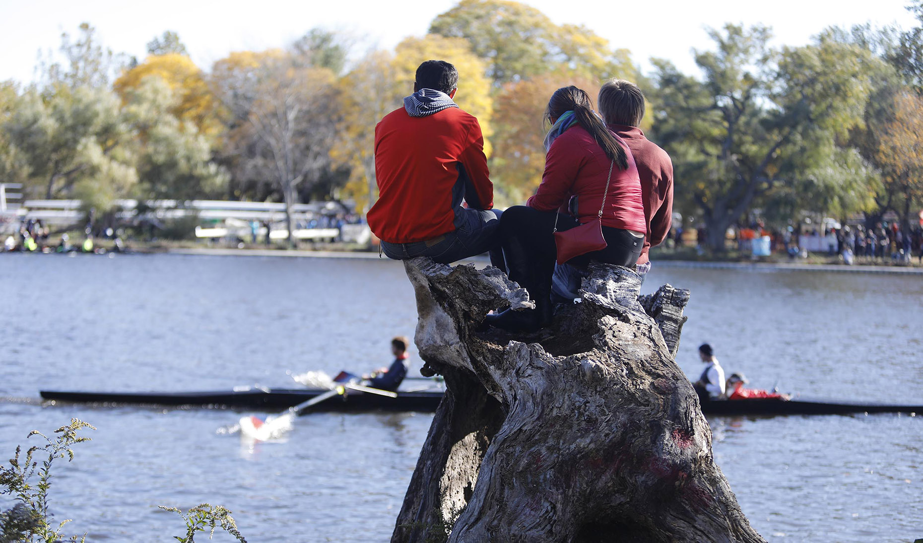 Rowing Spectators on a Tree Stump